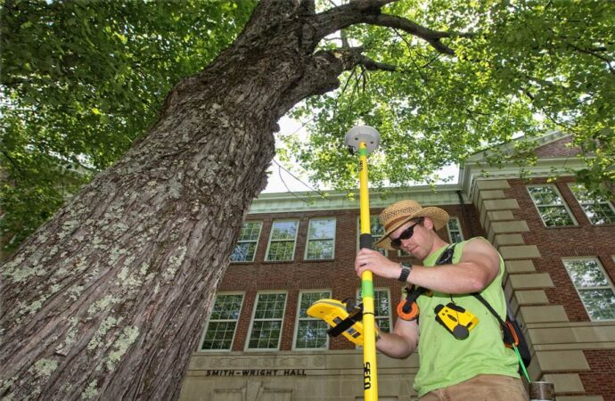 Arborist Consultations-Solana Beach CA Tree Trimming and Stump Grinding Services-We Offer Tree Trimming Services, Tree Removal, Tree Pruning, Tree Cutting, Residential and Commercial Tree Trimming Services, Storm Damage, Emergency Tree Removal, Land Clearing, Tree Companies, Tree Care Service, Stump Grinding, and we're the Best Tree Trimming Company Near You Guaranteed!
