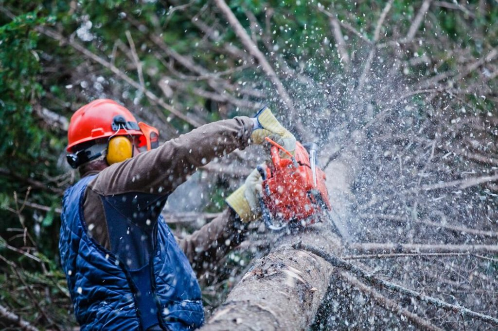 Cardiff-Solana Beach CA Tree Trimming and Stump Grinding Services-We Offer Tree Trimming Services, Tree Removal, Tree Pruning, Tree Cutting, Residential and Commercial Tree Trimming Services, Storm Damage, Emergency Tree Removal, Land Clearing, Tree Companies, Tree Care Service, Stump Grinding, and we're the Best Tree Trimming Company Near You Guaranteed!