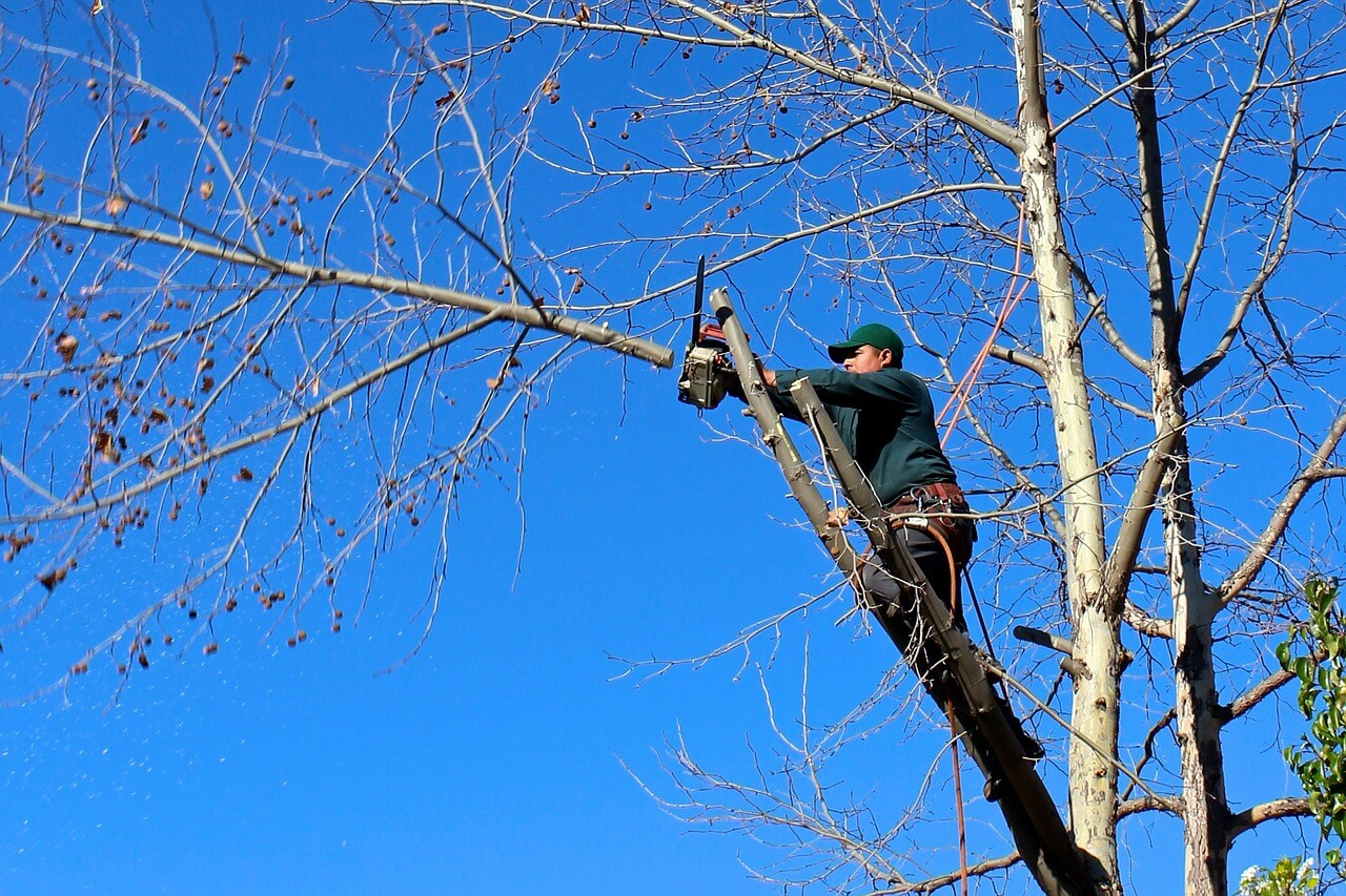 Contact Us-Solana Beach CA Tree Trimming and Stump Grinding Services-We Offer Tree Trimming Services, Tree Removal, Tree Pruning, Tree Cutting, Residential and Commercial Tree Trimming Services, Storm Damage, Emergency Tree Removal, Land Clearing, Tree Companies, Tree Care Service, Stump Grinding, and we're the Best Tree Trimming Company Near You Guaranteed!