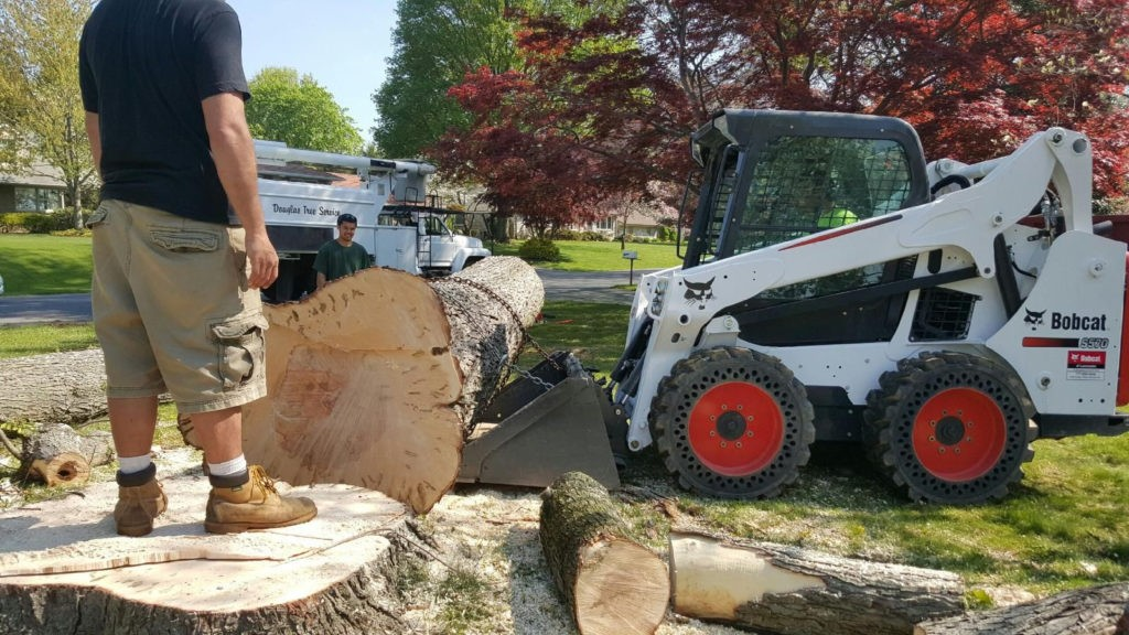 Del Mar-Solana Beach CA Tree Trimming and Stump Grinding Services-We Offer Tree Trimming Services, Tree Removal, Tree Pruning, Tree Cutting, Residential and Commercial Tree Trimming Services, Storm Damage, Emergency Tree Removal, Land Clearing, Tree Companies, Tree Care Service, Stump Grinding, and we're the Best Tree Trimming Company Near You Guaranteed!