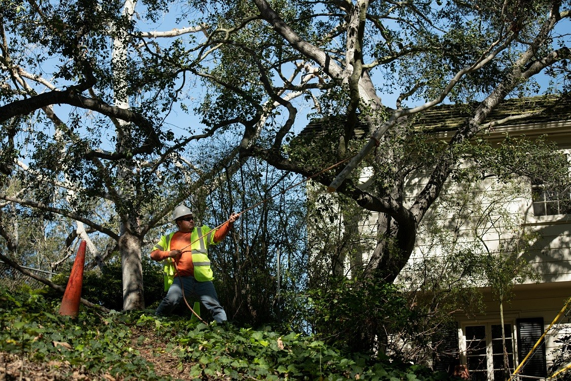 Encinitas-Solana Beach CA Tree Trimming and Stump Grinding Services-We Offer Tree Trimming Services, Tree Removal, Tree Pruning, Tree Cutting, Residential and Commercial Tree Trimming Services, Storm Damage, Emergency Tree Removal, Land Clearing, Tree Companies, Tree Care Service, Stump Grinding, and we're the Best Tree Trimming Company Near You Guaranteed!