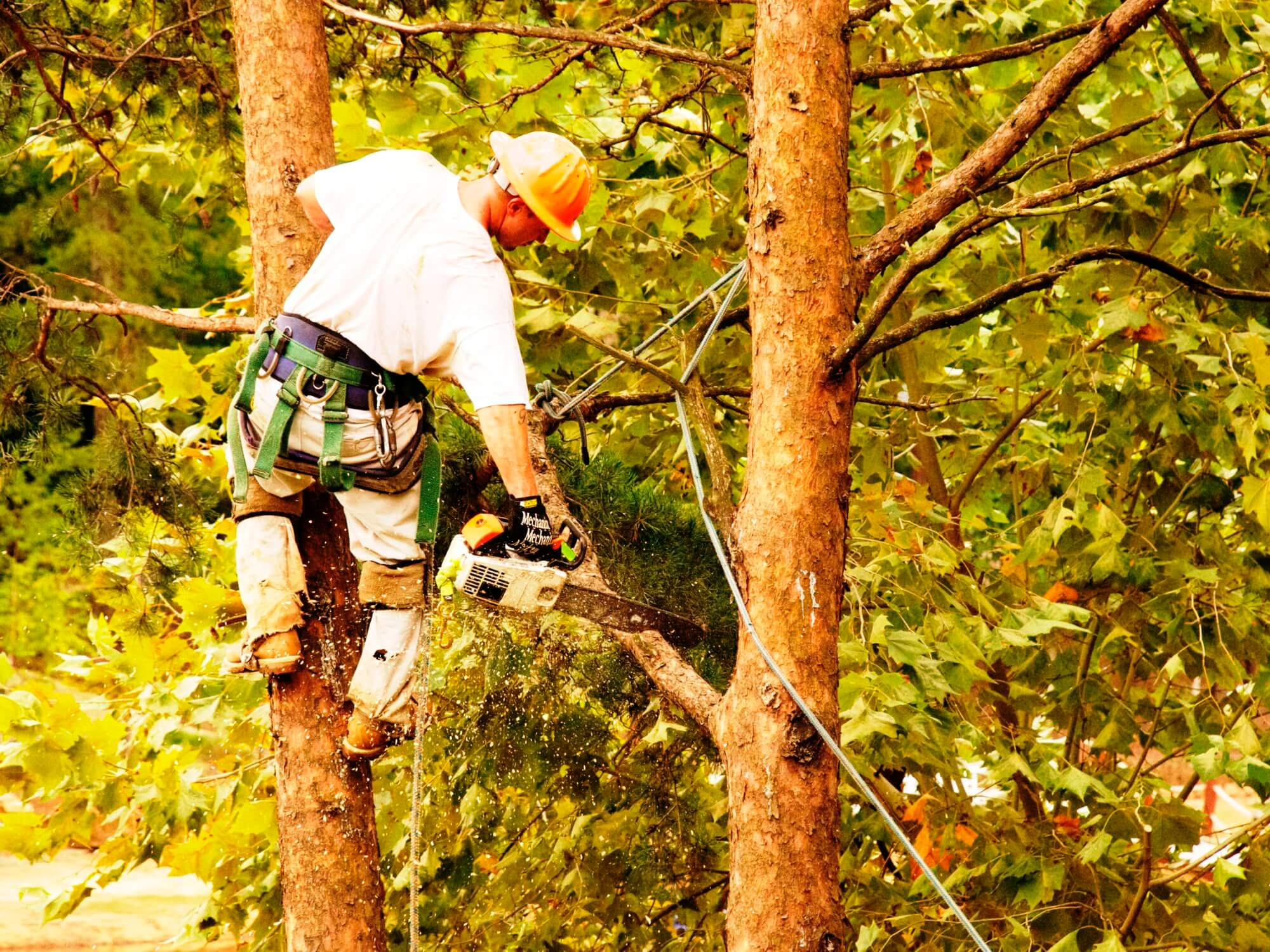 Solana Beach CA Tree Trimming and Stump Grinding Services Home Page Image-We Offer Tree Trimming Services, Tree Removal, Tree Pruning, Tree Cutting, Residential and Commercial Tree Trimming Services, Storm Damage, Emergency Tree Removal, Land Clearing, Tree Companies, Tree Care Service, Stump Grinding, and we're the Best Tree Trimming Company Near You Guaranteed!