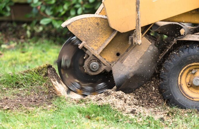 Stump Grinding-Solana Beach CA Tree Trimming and Stump Grinding Services-We Offer Tree Trimming Services, Tree Removal, Tree Pruning, Tree Cutting, Residential and Commercial Tree Trimming Services, Storm Damage, Emergency Tree Removal, Land Clearing, Tree Companies, Tree Care Service, Stump Grinding, and we're the Best Tree Trimming Company Near You Guaranteed!