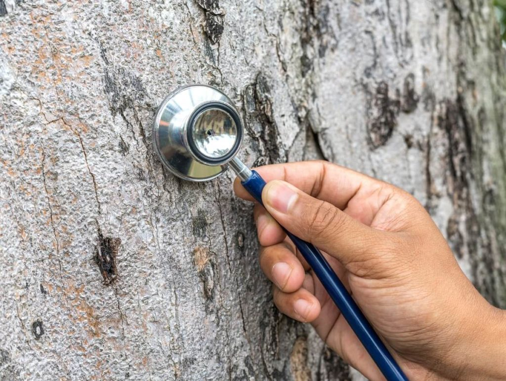 Tree Assessments-Solana Beach CA Tree Trimming and Stump Grinding Services-We Offer Tree Trimming Services, Tree Removal, Tree Pruning, Tree Cutting, Residential and Commercial Tree Trimming Services, Storm Damage, Emergency Tree Removal, Land Clearing, Tree Companies, Tree Care Service, Stump Grinding, and we're the Best Tree Trimming Company Near You Guaranteed!