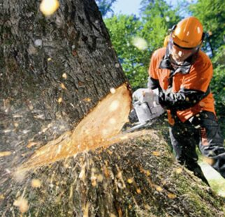 Tree Cutting-Solana Beach CA Tree Trimming and Stump Grinding Services-We Offer Tree Trimming Services, Tree Removal, Tree Pruning, Tree Cutting, Residential and Commercial Tree Trimming Services, Storm Damage, Emergency Tree Removal, Land Clearing, Tree Companies, Tree Care Service, Stump Grinding, and we're the Best Tree Trimming Company Near You Guaranteed!